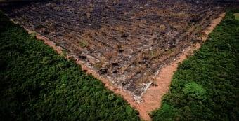 IMAGEM: Em resposta ao STF, Bolsonaro nega omissão em combate ao desmatamento