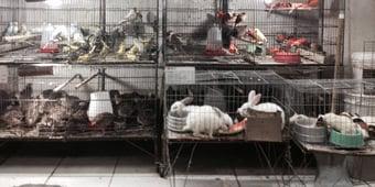 IMAGEM: OMS recomenda suspensão da venda de mamíferos vivos em mercados