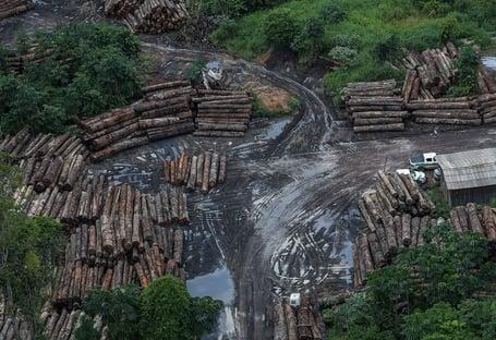 Brasil falha na fiscalização da madeira ilegal, dizem especialistas
