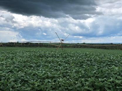 China continua sendo principal destino da soja brasileira