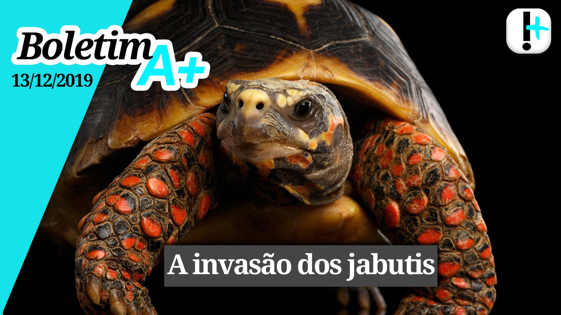 Boletim A+: a invasão dos jabutis