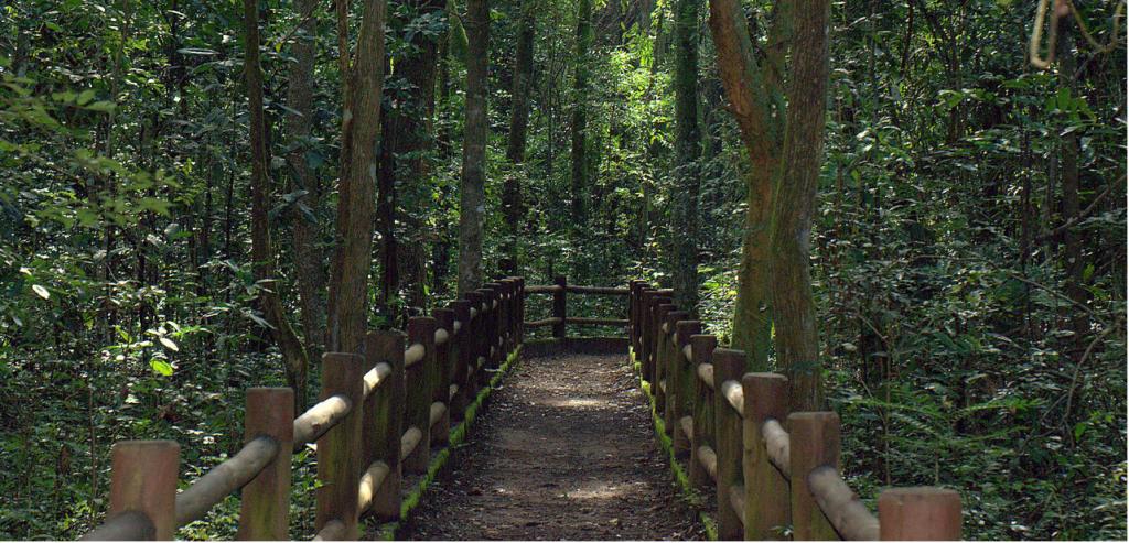 Bolsonaro autoriza privatização de dois parques nacionais